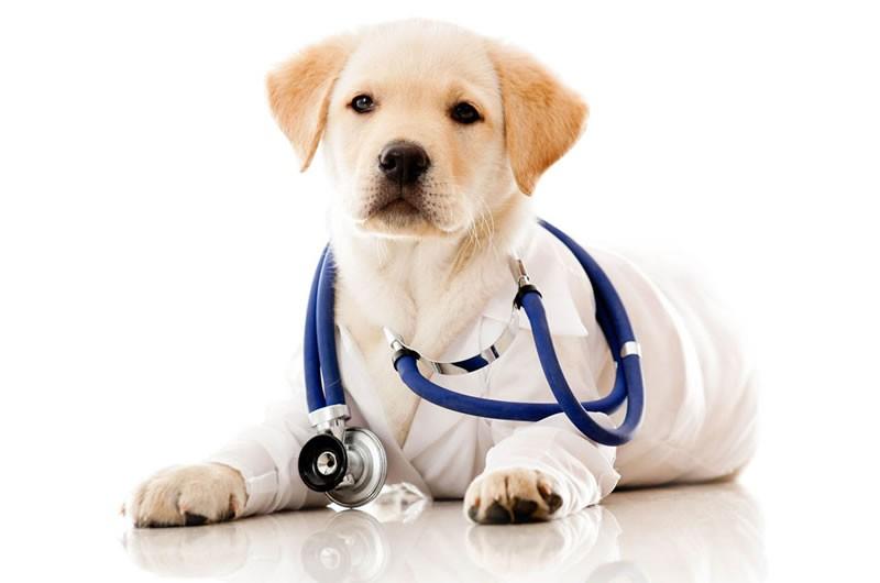 Dijagnostika i liječenje infektivnih i parazitskih obolenja